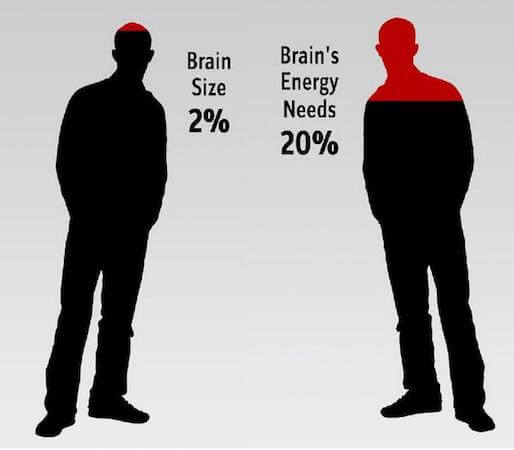 brain energy consumption